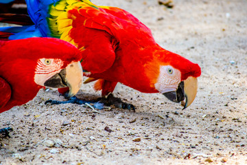 angulodafoto Parque das Aves Foz do Iguaçu Paraná