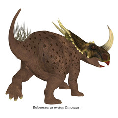 Brown Rubeosaurus Dinosaur Tail with Font - Rubeosaurus was a Ceratopsian herbivorous dinosaur that lived during the Cretaceous Period of North America.