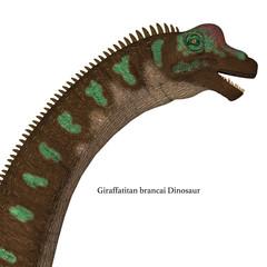 Giraffatitan Dinosaur Head with Font - Giraffatitan was a herbivorous sauropod dinosaur that lived in Africa during the Jurassic Period.