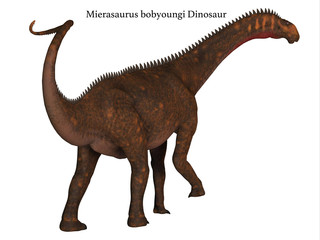 Mierasaurus Dinosaur Tail with Font - Mierasaurus was a herbivorous sauropod dinosaur that lived in Utah, USA during the Cretaceous Period.