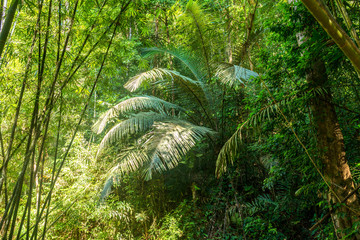 Big fronds from a fern in the tropical forest and jungle of the Khao Sok national park