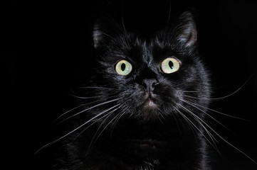 Postcard for Halloween: portrait of a black cat