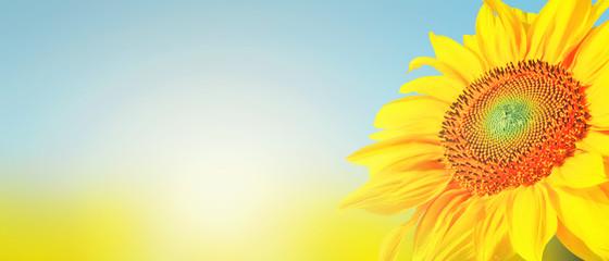 Wunderschöne Sonnenblume