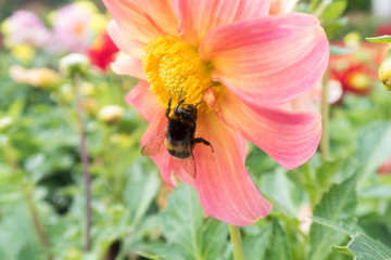 insects on bright colorful summer flowers
