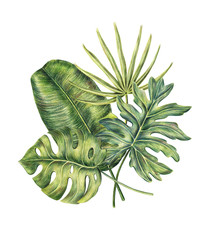 Composition of four exotic tropical palm leaves - monstera, areca, and banana, colored pencil illustration isolated on white background. Hand drawn floral composition of monstera, banana, palm leaves