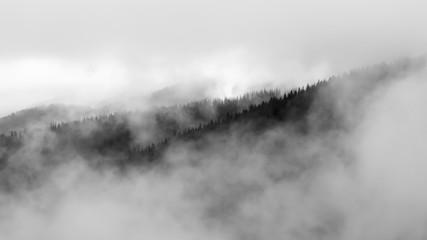las jest ukryty w chmurach - 215714422