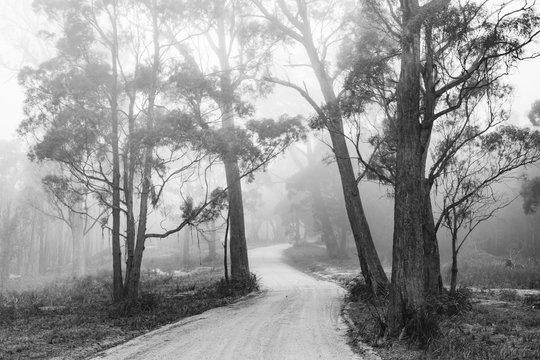 Tasmanian Backroad