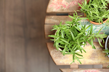 Pots with fresh rosemary on table, top view