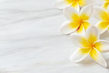 In de dag Frangipani Frangipani flower on white background