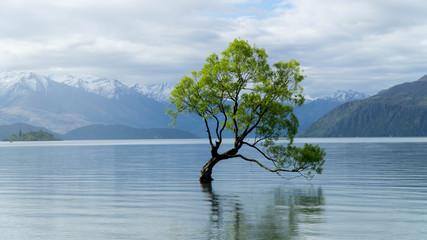 Lonely tree growing from the Wanaka lake, New Zealand