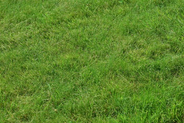 Green well-groomed lawn. Natural background