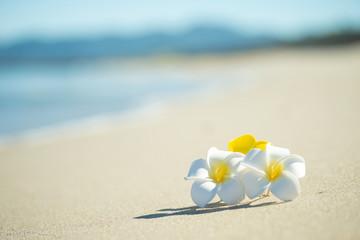Tuinposter Frangipani 砂浜とプルメリア