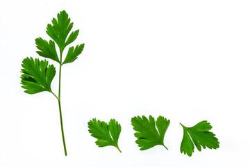 fresh garden parsley leaves isolated on white background