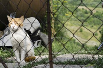 gatto dormiglione bianco e rosso dietro una rete