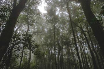 Walk to the jungle tree sky clouds sun