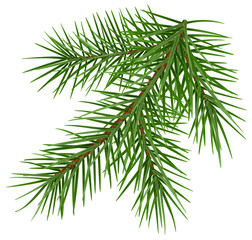 Green fluffy spruce branch accessory symbol christmas