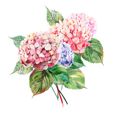 Beautiful bright elegant autumn wonderful colorful tender gentle pink herbal floral hydrangea flowers with green leaves bouquet watercolor hand illustration.
