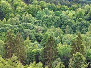 Mischwald mit diversen Baumarten