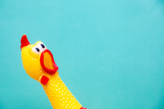 squawking chicken or squeaky toy are shouting and copy space pastel background.
