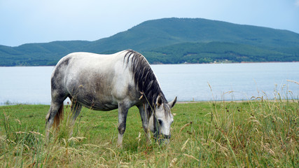 Pferd am Plastiras Lake