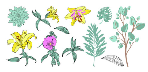 set of hand drawing flowers, vector illustration