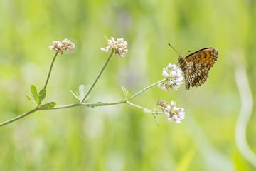 Day butterflies on flowers