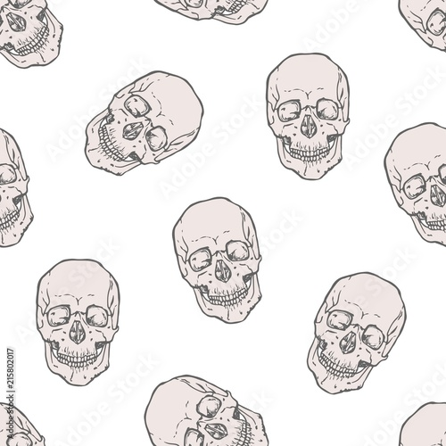 Seamless Pattern With Realistic Human Skulls On White Background Backdrop Dead Heads Or Headbones