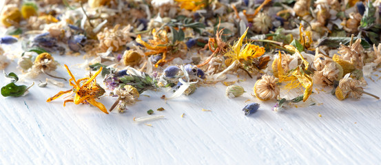Header or banner for homeopathy/natural pharmacy: mix from dried herbs and blooms on white wooden ground