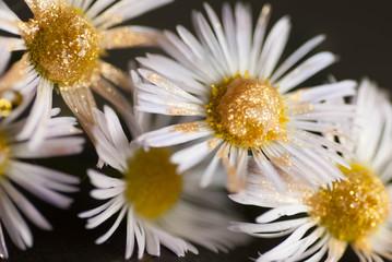 macro photo flowers