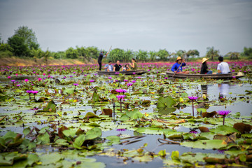 Red Lotus Floating Market in Thailand
