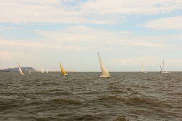 Sailing Yachts at Sea.