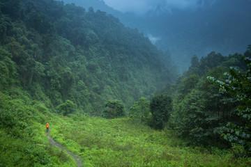Man trekking in lush green forest of Annapurna, Nepal.