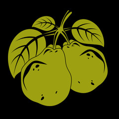 Harvesting symbol, vector fruits isolated. Two organic sweet pears with green leaves, healthy food idea design icon.