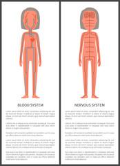 Blood and Nerve Systems Set Vector Illustration