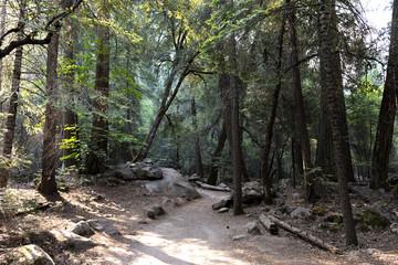 forest path Yosemite