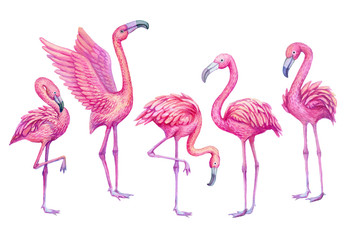 Flamingo watercolor tropical set. Exotic paradise birds illustration.