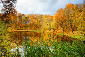 Colorful forest scene in the fall with orange and yellow foliage. Autumn city park view in Vilnius, Lithuania.