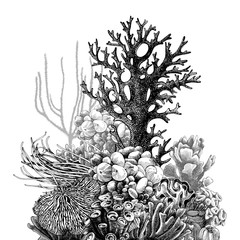 Hand drawn coral reef