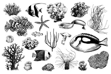 Hand drawn set of corals and coral fish inhabitants