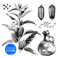 Hand drawn sesame set - plant, seeds and oil