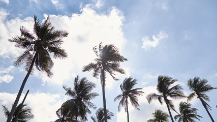 Coconut Palm Trees Summer Sunny Sky