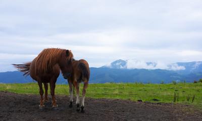 Horses on Mount Jaizkibel with Aiako Harriak in the background