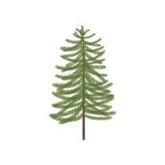 Vector illustration of fir tree. Realistic vector fir tree.