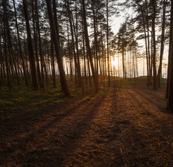 Beautiful sunset in the winter forest near the Baltic Sea beach in Klaipeda, Lithuania