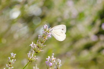 small, tender butterfly in meadow