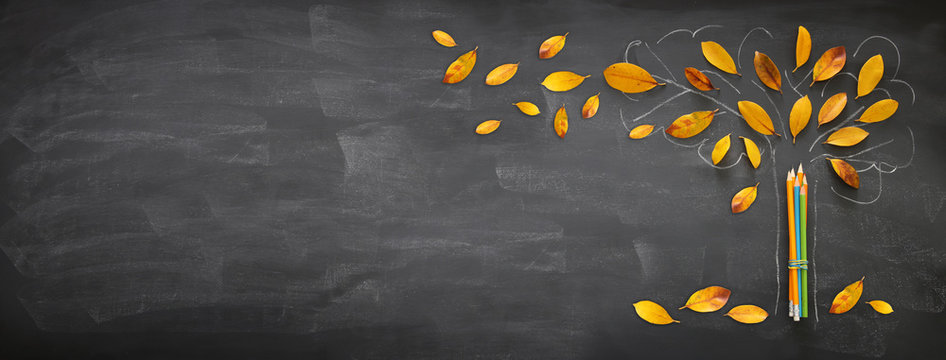 Back to school concept. Top view banner of pencils next to tree sketch with autumn dry leaves over classroom blackboard background.