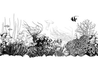 Hand drawn black and white coral border