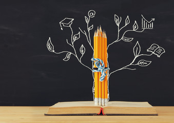 Back to school concept. tree of knowledge sketch and pencils over open book in front of classroom blackboard.