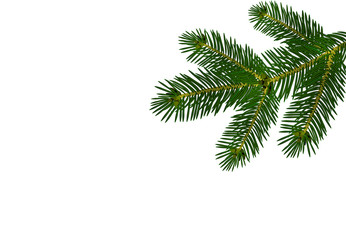 A green realistic lush branch of fir or pine. Isolated on white background. illustration