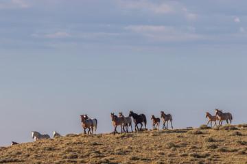Herd of Wild Horses in Colorado